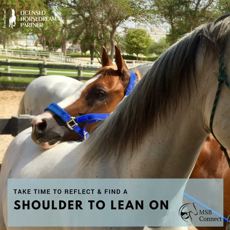 Self reflection and stress management through horses