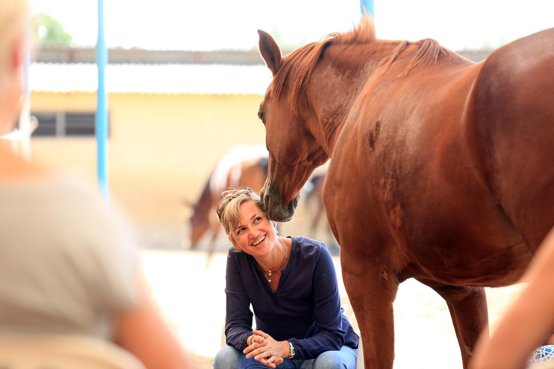 corona, horses, horse sense, horse wisdom, dubai