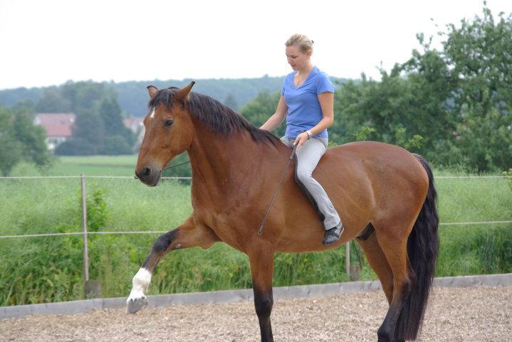 Dubai self development for riders and horses