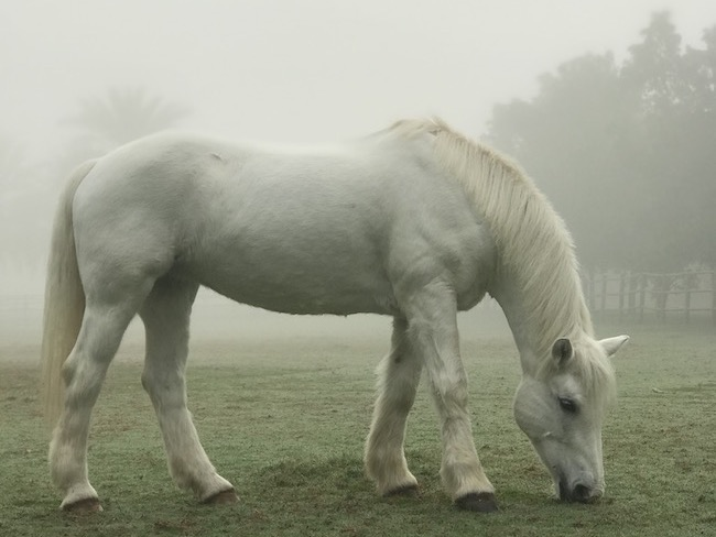 horse dubai winter mist mysterious desert palm polo hotel