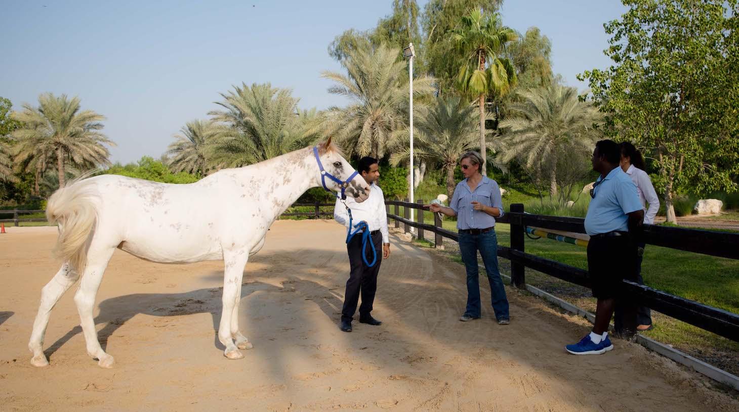 HorseDream equine assisted team training dubai