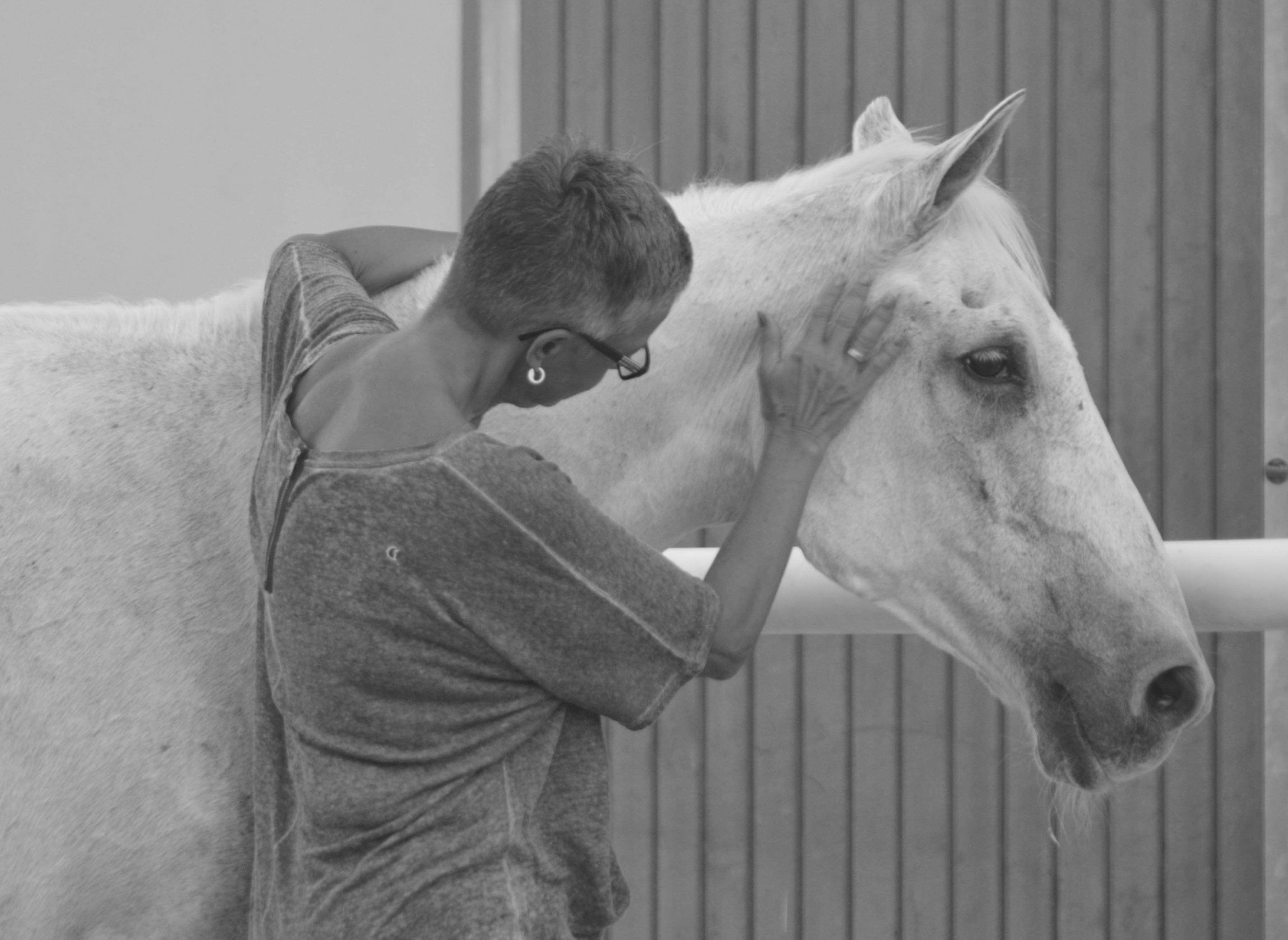 Horse and human in harmony - Abu Dhabi, United Arab Emirates