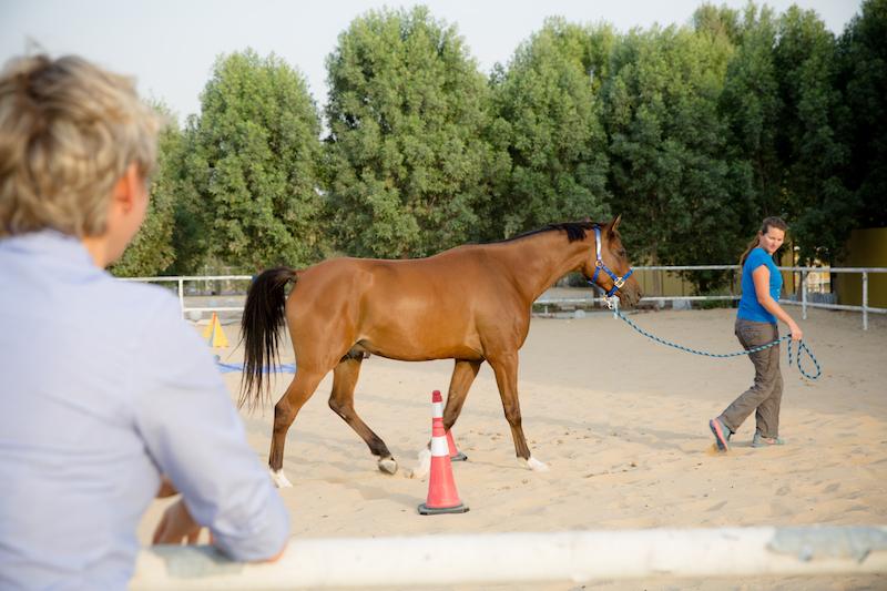 Horse Training Tips Dubai