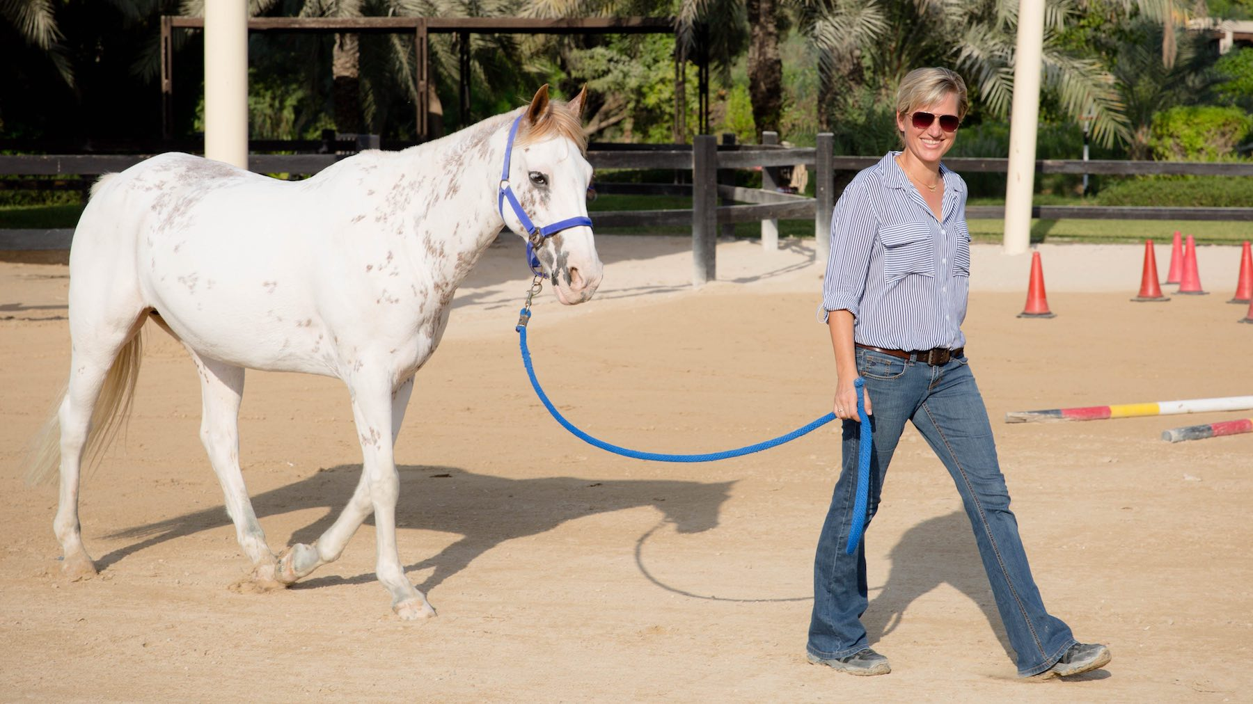 Leadership training with horses - Horsedream Dubai