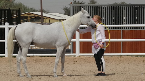 relationship, define respect, nearness, trusting, horse rescue abu dhabi, uae