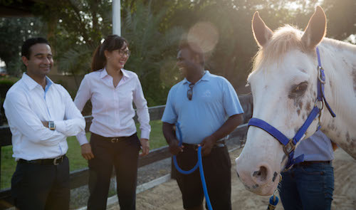 Learning the practical side of leadership from horses! Dubai and Abu Dhabi HorseDream courses
