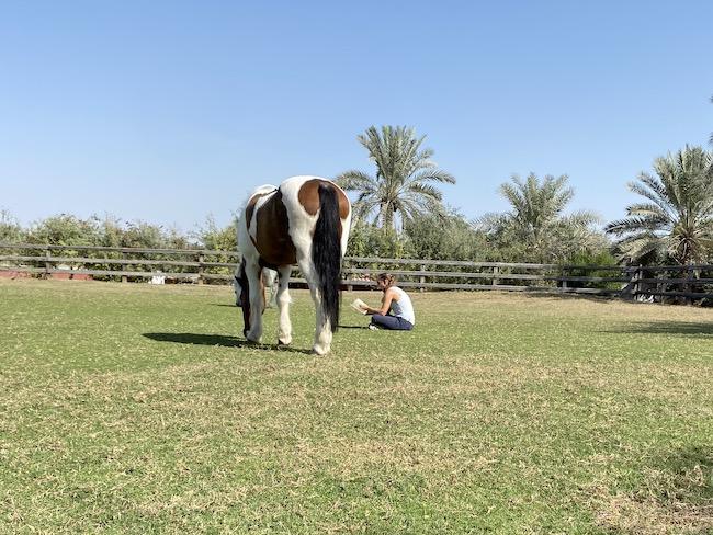 Desert Palm Melia horses mothers equestrian
