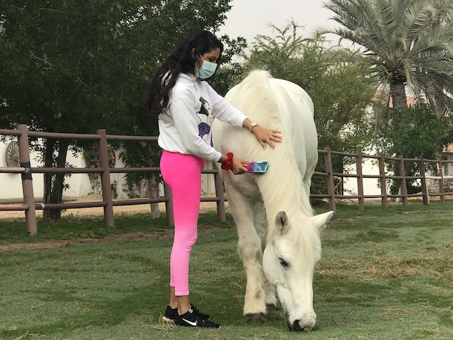 horses brushing therapy dubai