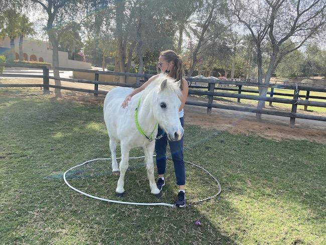 team building dubai horses melia desert palm