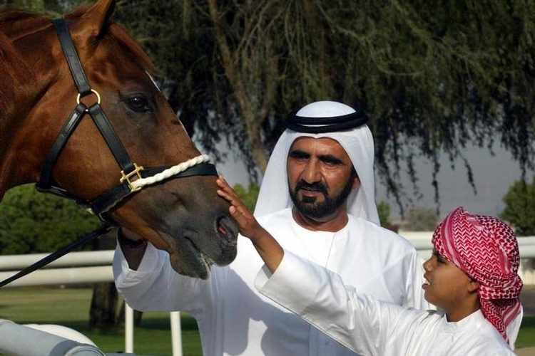 Dubai - what we can learn from horses