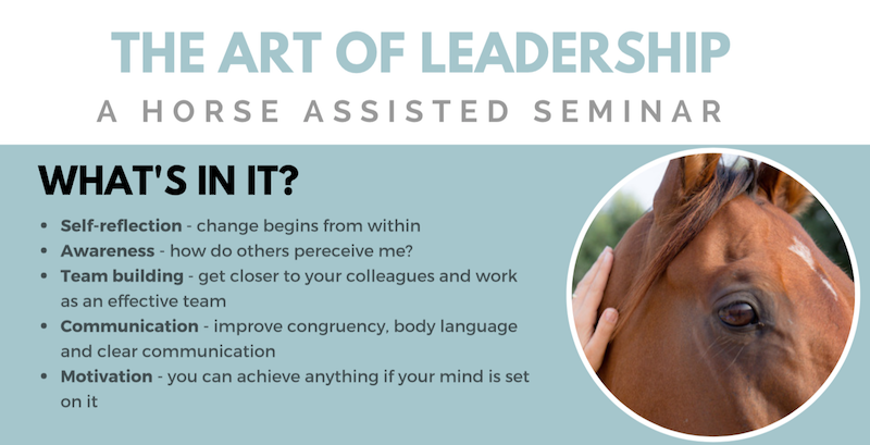 Results from an equine based leadership course in Dubai or Abu Dhabi