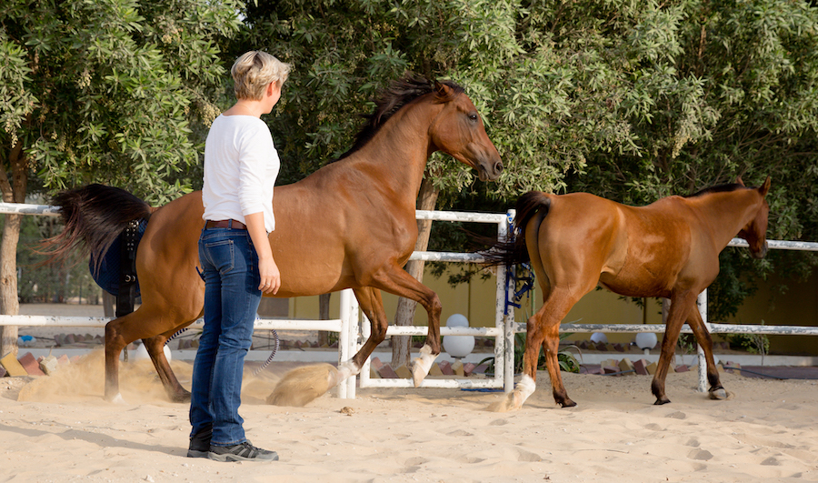 horse behavior, horsemanship, horse riding accidents, learn about horses, horseback riding, dangerous