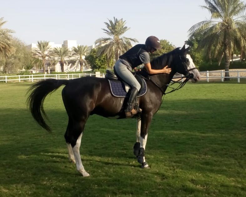 positive reinforcement behaviour horse dubai riding stallion