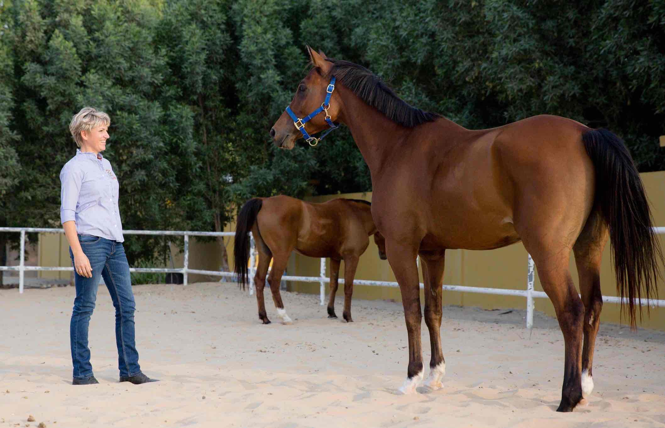 HorseDream Dubai, equine assisted leadership training