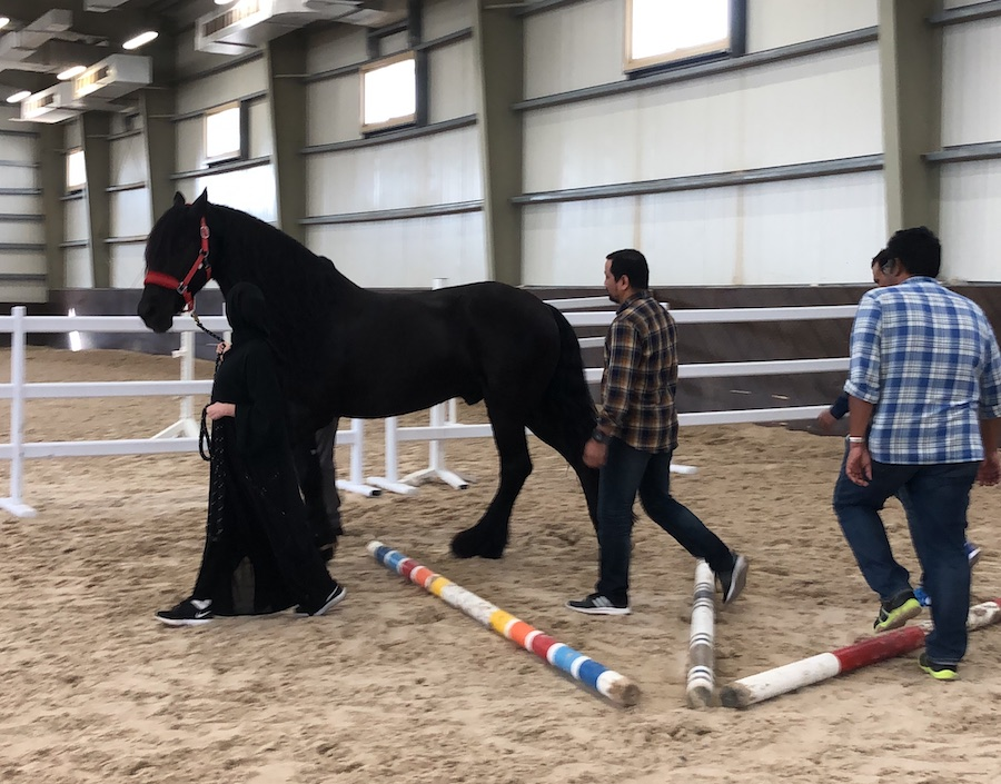 anxiety dubai abu dhabi, uncertainty, workshop, seminar, course, horses, anxiousness, covid-19